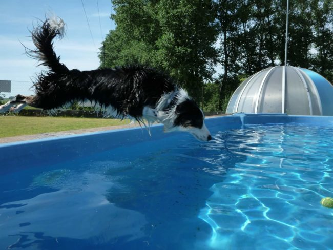 Někteří domácí mazlíčci bazénu nedovedou odolat